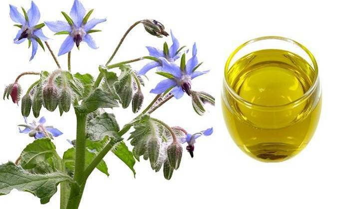 borage oil for anxiety, Skeleton